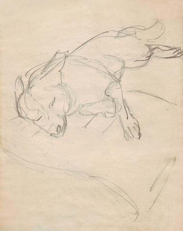 Skiss, skisser. Teckning, teckningar. Studie. Sover, sovande hund, sova, vilande hund, vilar, vila. Hund, hundar i konsten, konst. Sktch, sketches, study, studies, drawing, drawings. Relaxing dog, sleeping dog. Sleep, sleeps. rests, rest. Relax. Dog, dogs in art.